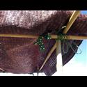 Malla de sombreo Marrón - Rollo 100m